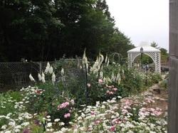 きよみづ郷のばら園