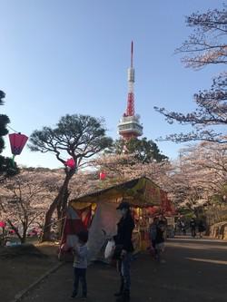 桜と宇都宮タワー