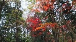 新潟市秋葉区 中野邸 庭園の紅葉