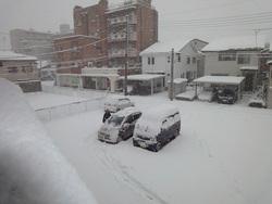 2016年1月24日大雪